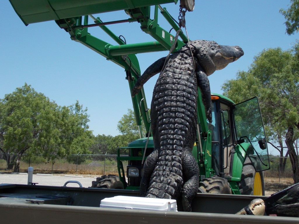 Teen harvests an 800-pound Texas state record alligator on his first hunt