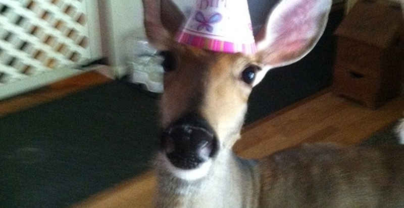Lilly the Deer